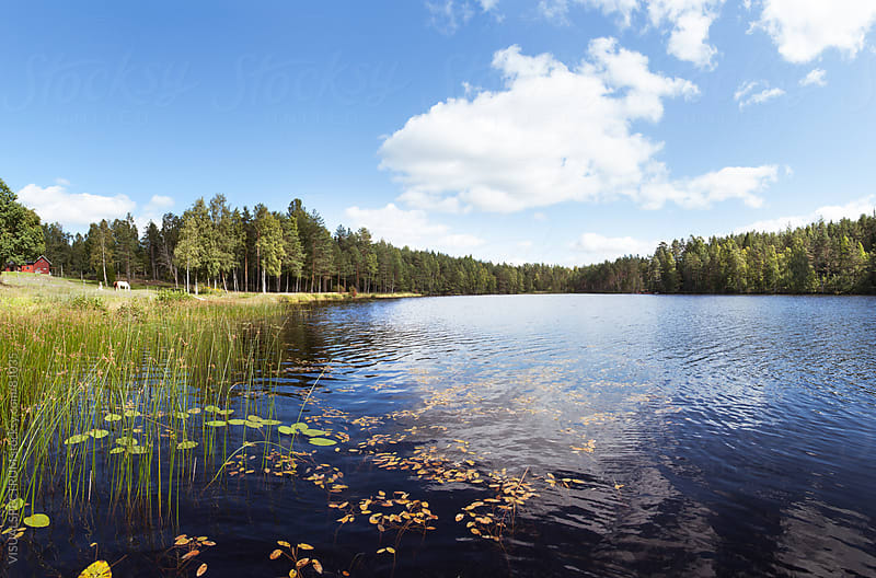 Scandinavian Lake & Forest by VISUALSPECTRUM for Stocksy United