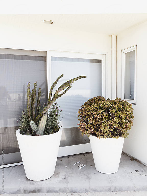 large potted plants outside of white home by Nicole Mason for Stocksy United