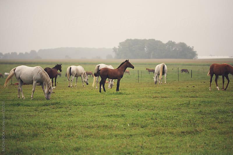 Grazing Horses #2 by ALICIA BOCK for Stocksy United