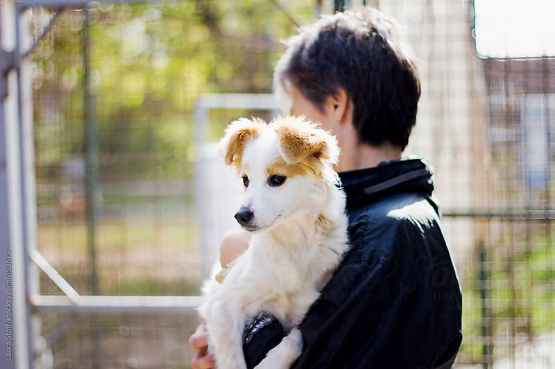 Crossbreed pup in woman's arm in sunny dog pound by Laura Stolfi for Stocksy United