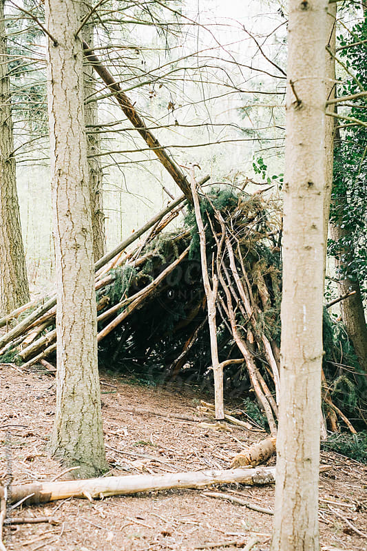Den in the woods by Sam Burton for Stocksy United