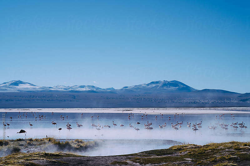 Flamingos in the mist, Laguna Colorada, Bolivia by Adrian Seah for Stocksy United