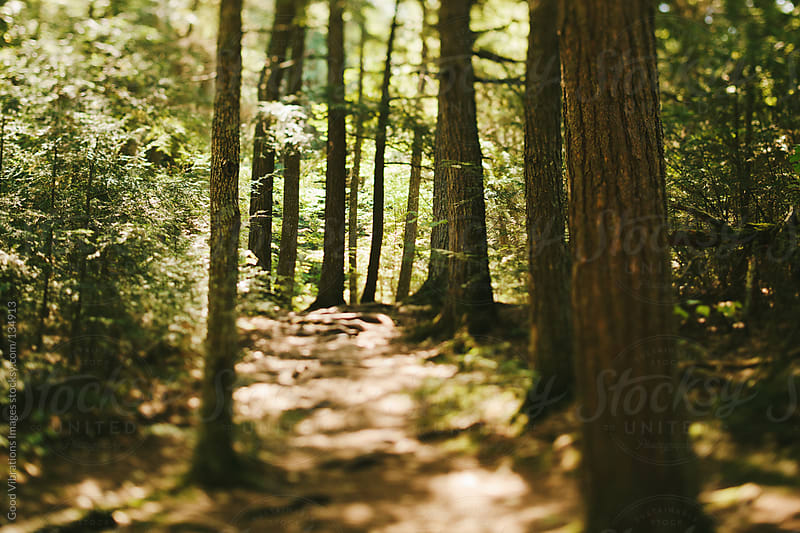 Path in the Forest by Good Vibrations Images for Stocksy United