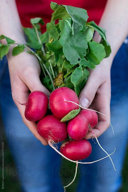 fresh radish hold in hand by Babett Lupaneszku for Stocksy United