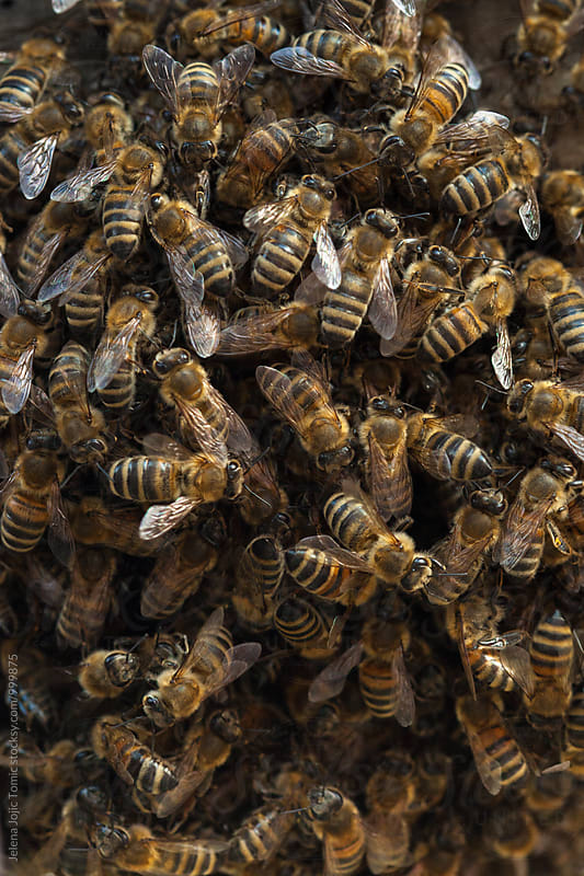 Honeybee by Jelena Jojic Tomic for Stocksy United