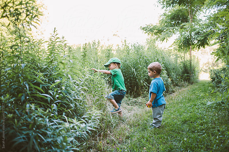 two little boys exploring nature in the bush by Sarah Lalone for Stocksy United