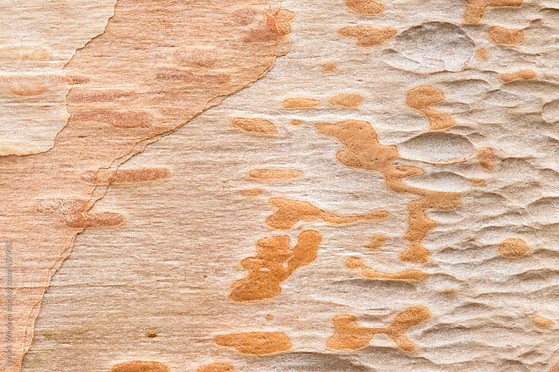 Variety of patterns and textures in a birch tree, closeup by Mark Windom for Stocksy United