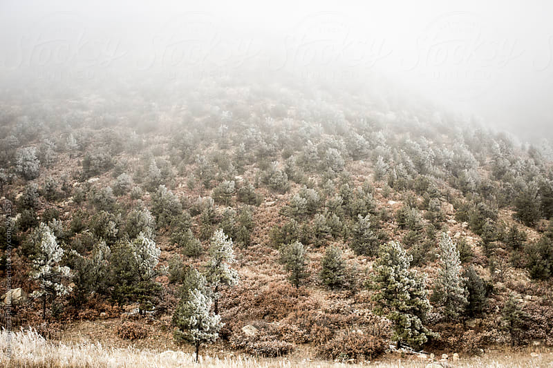 View of trees on the side of a mountain by Ann-Sophie Fjelloe-Jensen for Stocksy United