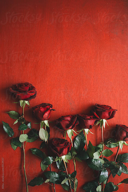 Red roses on red wooden background by Alita Ong for Stocksy United