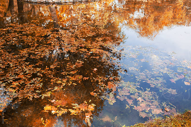 Tree reflection in a water by Jovana Rikalo for Stocksy United