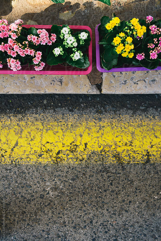Flower boxes on sidewalk from above by Urs Siedentop & Co for Stocksy United