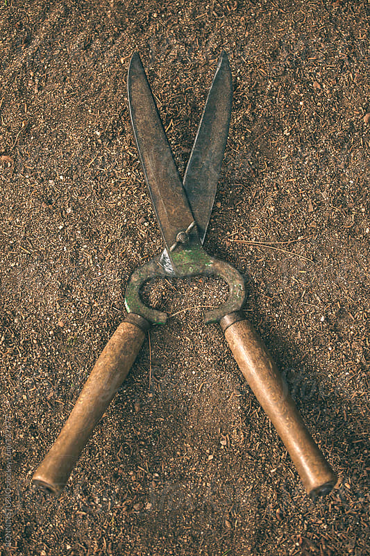 Rusty shears prune on a ground.  by BONNINSTUDIO for Stocksy United