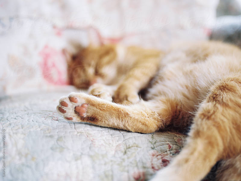 Focus on sleeping cat's paw, film shot by Laura Stolfi for Stocksy United