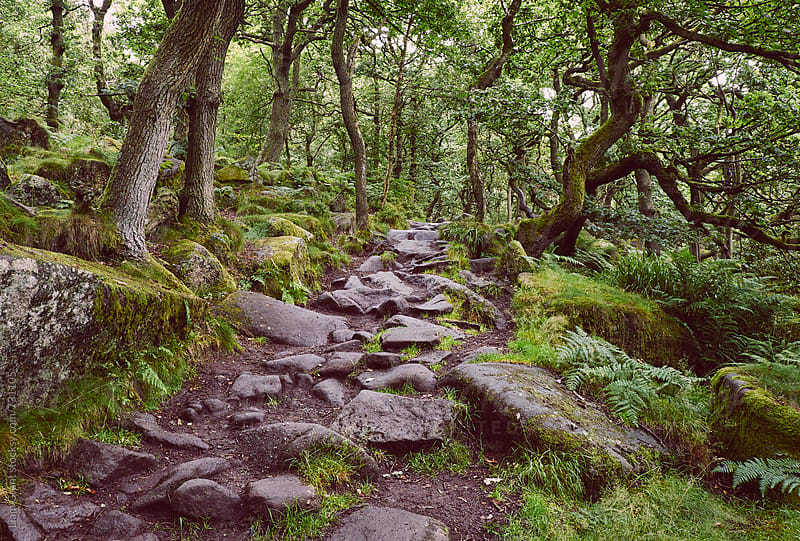 Path through ancient Oak woodland. Padley Gorge, Derbyshire, UK. by Liam Grant for Stocksy United