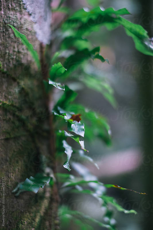 Natural Rain Forest by Rowena Naylor for Stocksy United