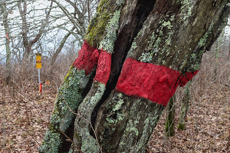 Boundary tree marked with red paint to denote boundary between public and private property by David Smart for Stocksy United