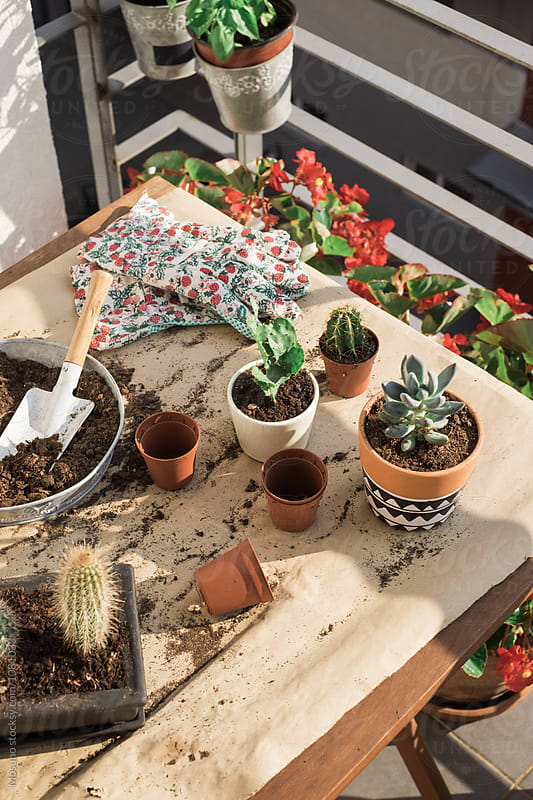 Cactuses Replanting by Mosuno for Stocksy United