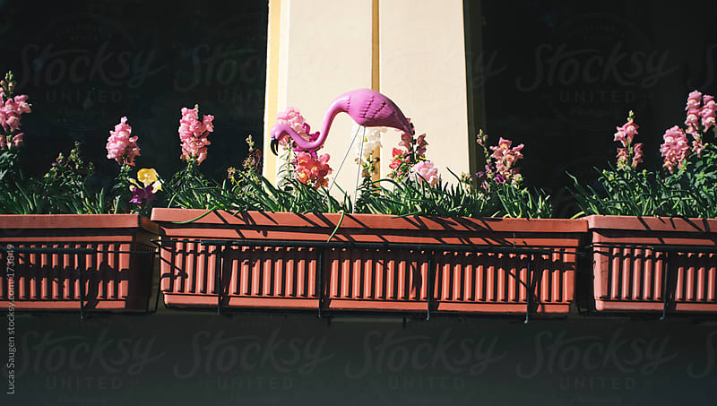 Plastic Flamingo in a planter by Lucas Saugen for Stocksy United