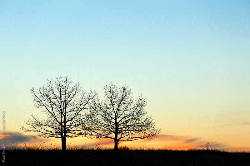 Two Trees at Sunset by Paul Tessier for Stocksy United