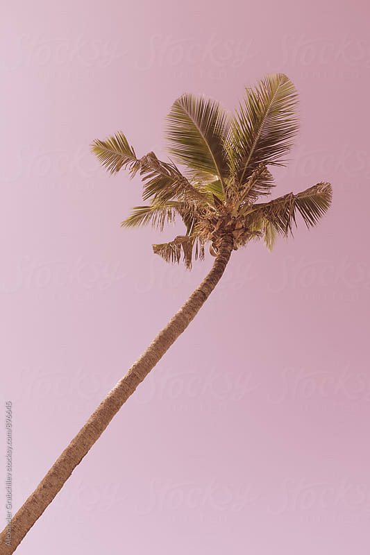 Simple Palm Tree On A Background of Pink Sky by Alexander Grabchilev for Stocksy United