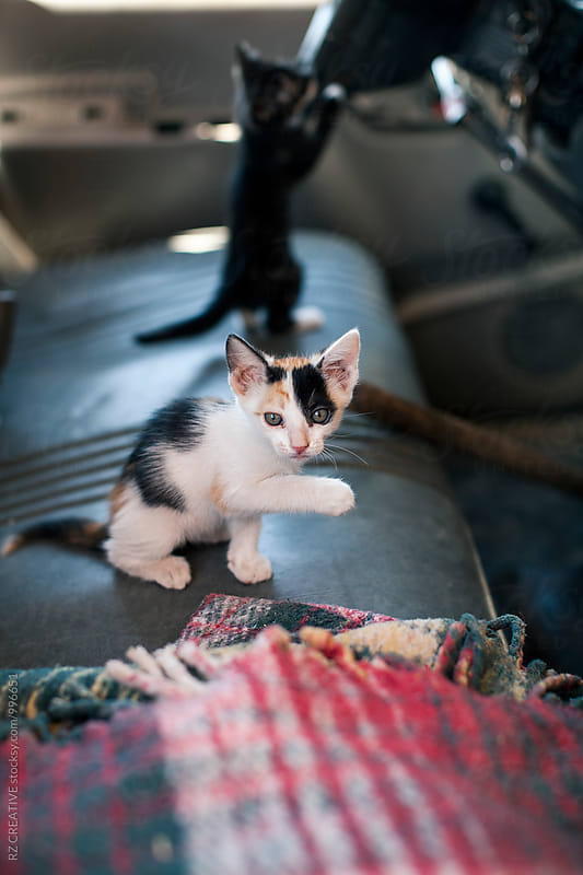 Two kittens in truck. by Robert Zaleski for Stocksy United