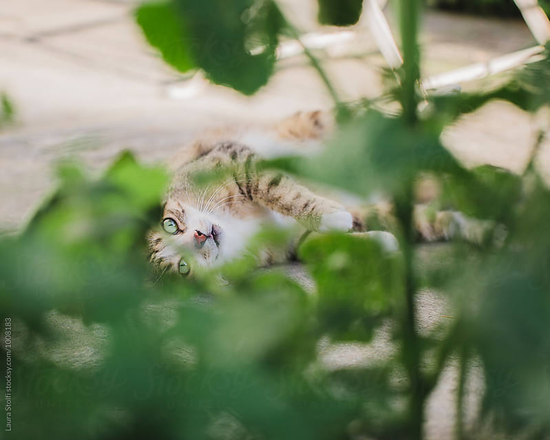 Cat with beautiful green eyes lays on pavement behind plant's leaves and looks at the camera by Laura Stolfi for Stocksy United