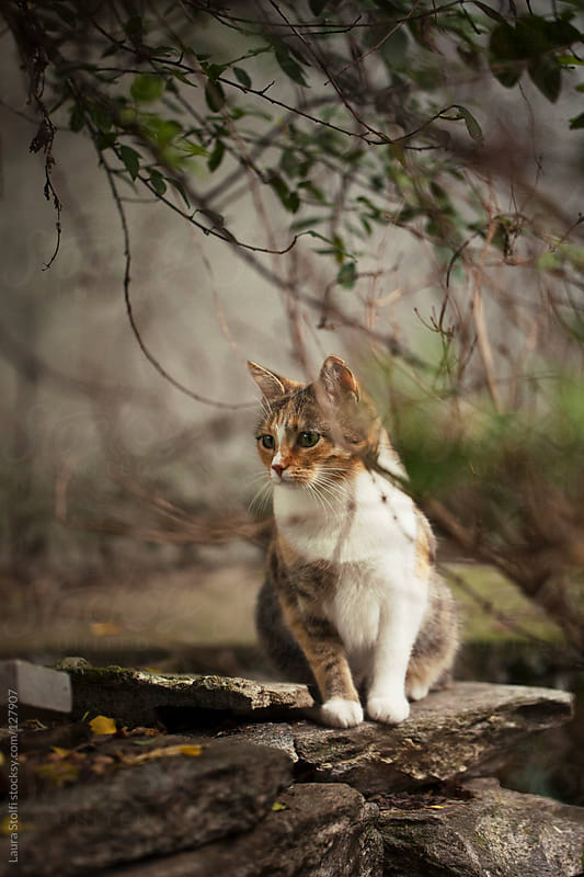 Cat sitting on ancient stones under shrub in garden by Laura Stolfi for Stocksy United