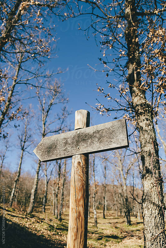 Wood Arrow Sign in the Forest by VICTOR TORRES for Stocksy United