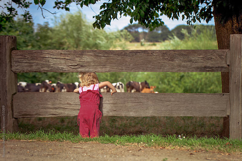 Female toddler on farm property looking at calves by Rowena Naylor for Stocksy United