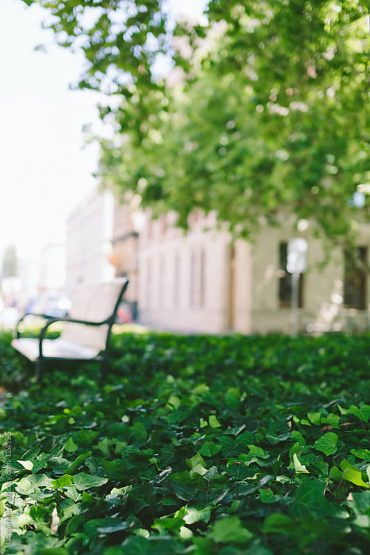 Park bench surrounded by a lush green ground cover by Jacqui Miller for Stocksy United