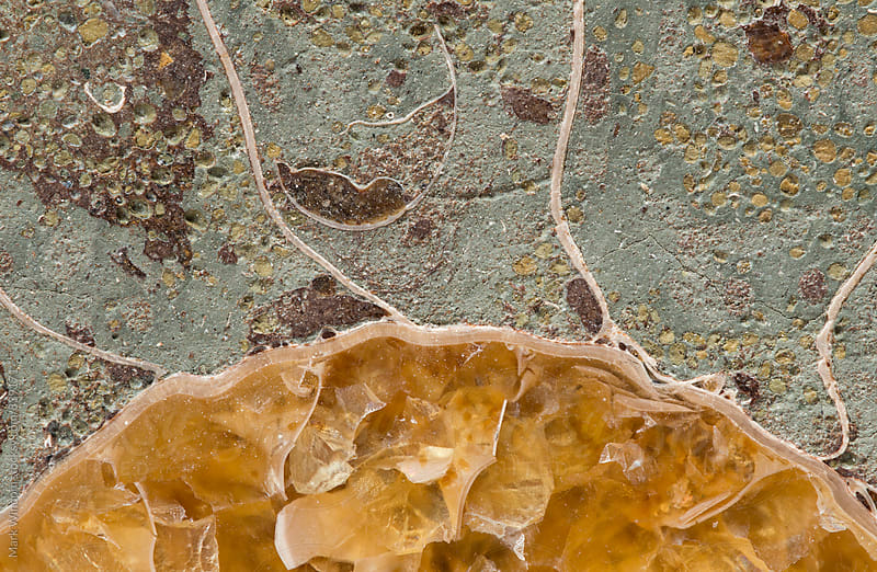 Fossil abstract, closeup by Mark Windom for Stocksy United