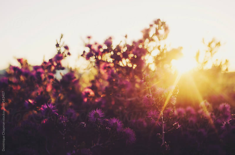 Flowers with sunset peeking through by Dominique Chapman for Stocksy United