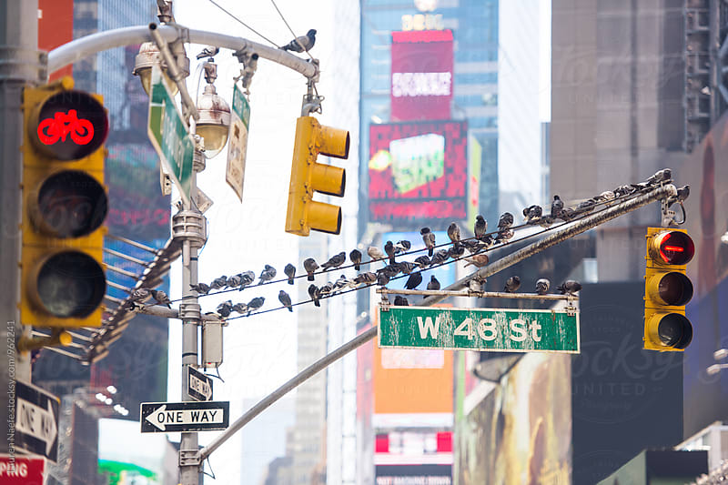 Pigeons on sign in Times Square by Lauren Naefe for Stocksy United