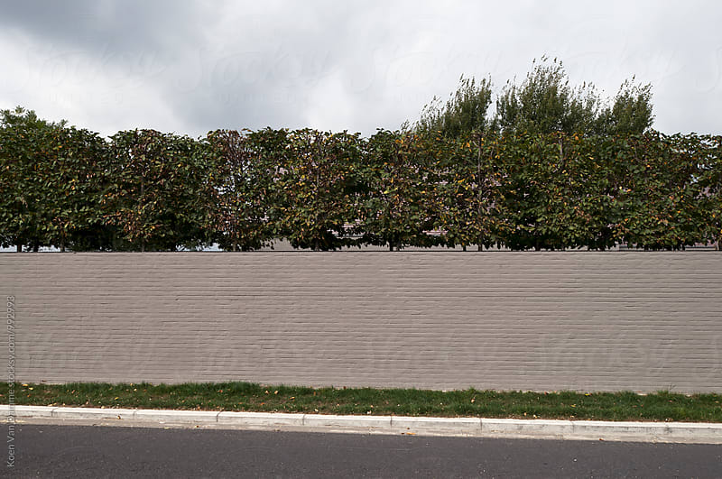 Garden wall by Koen Van Damme for Stocksy United