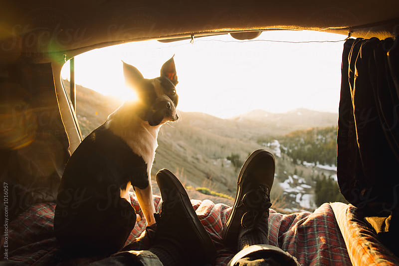Camping With Boston Terrier During Sunrise by Jake Elko for Stocksy United
