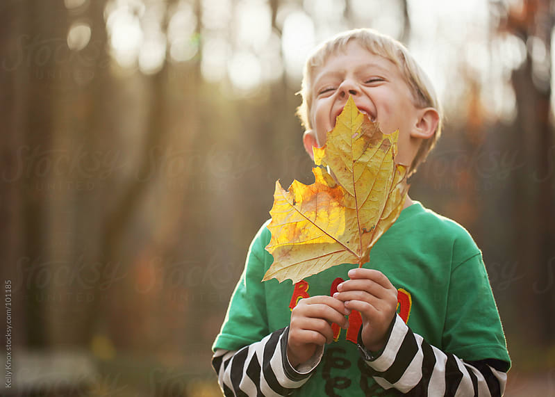 laughing boy holds a yellow leaf by Kelly Knox for Stocksy United