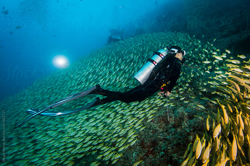 scuba diver with school of snapper by Song Heming for Stocksy United