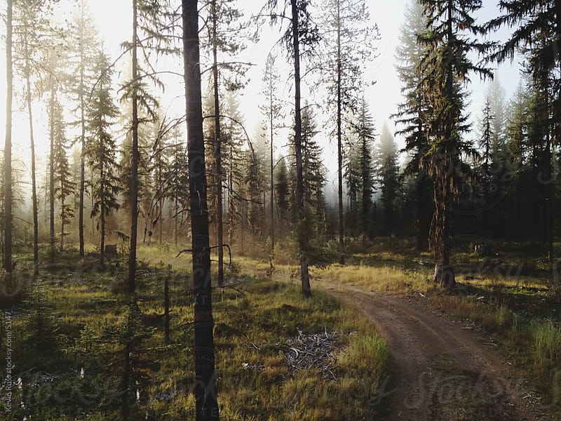 Sunrise Forest Road by Kevin Russ for Stocksy United