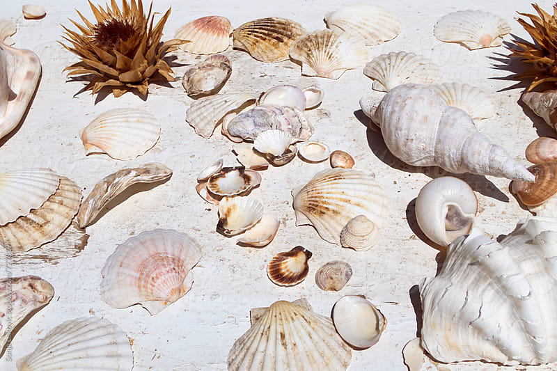 various seashells on white background by Sonja Lekovic for Stocksy United