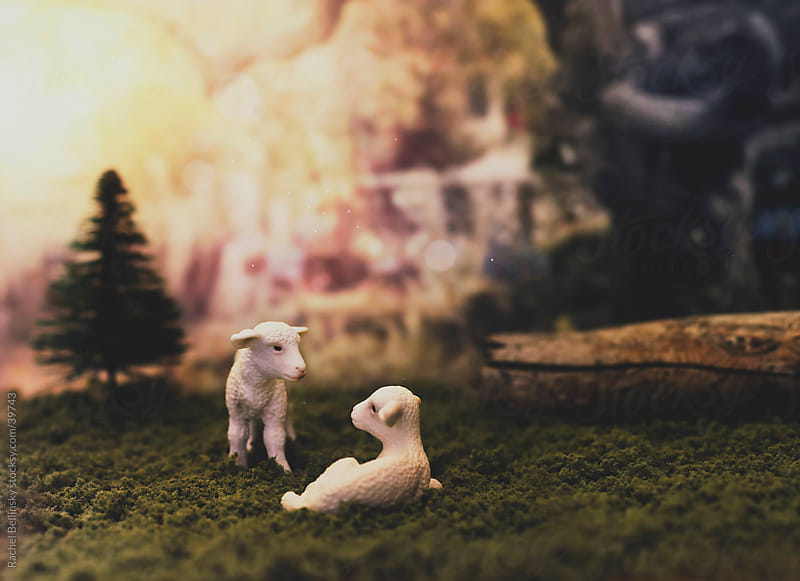 Two toy lambs in a sunny green pasture with trees by Rachel Bellinsky for Stocksy United