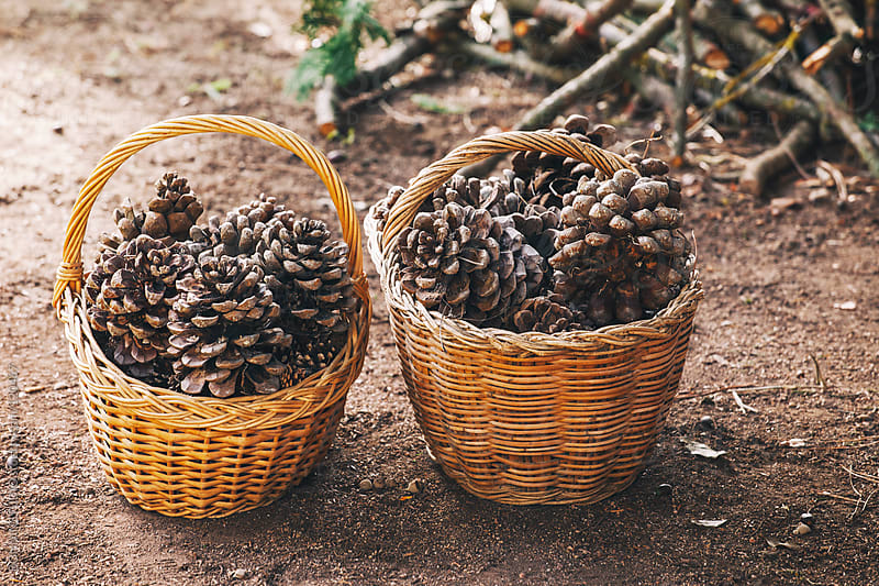 Two wicker basket full of pine cones. by BONNINSTUDIO for Stocksy United