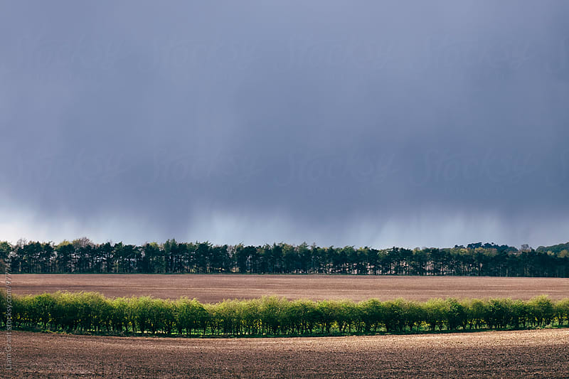 Sunlight on hedgerow with rain falling and black cloud beyond. Norfolk, UK. by Liam Grant for Stocksy United