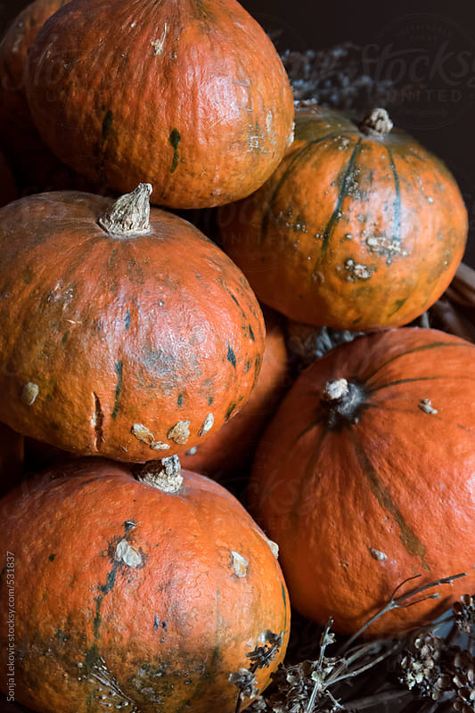 pumpkins on black background by Sonja Lekovic for Stocksy United
