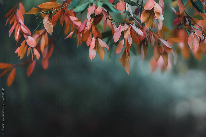 Autumn Leaves by Helen Sotiriadis for Stocksy United