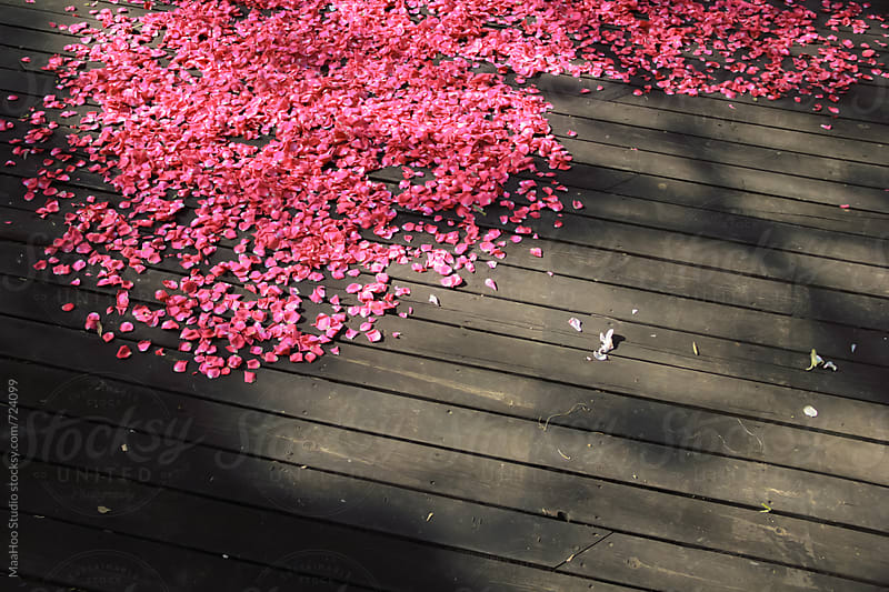 Wood floor with pink petals by MaaHoo Studio for Stocksy United