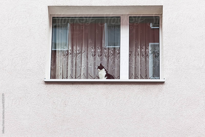 Cat looking out the window by Mima Foto for Stocksy United