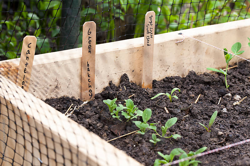 Square Foot Garden by Jill Chen for Stocksy United