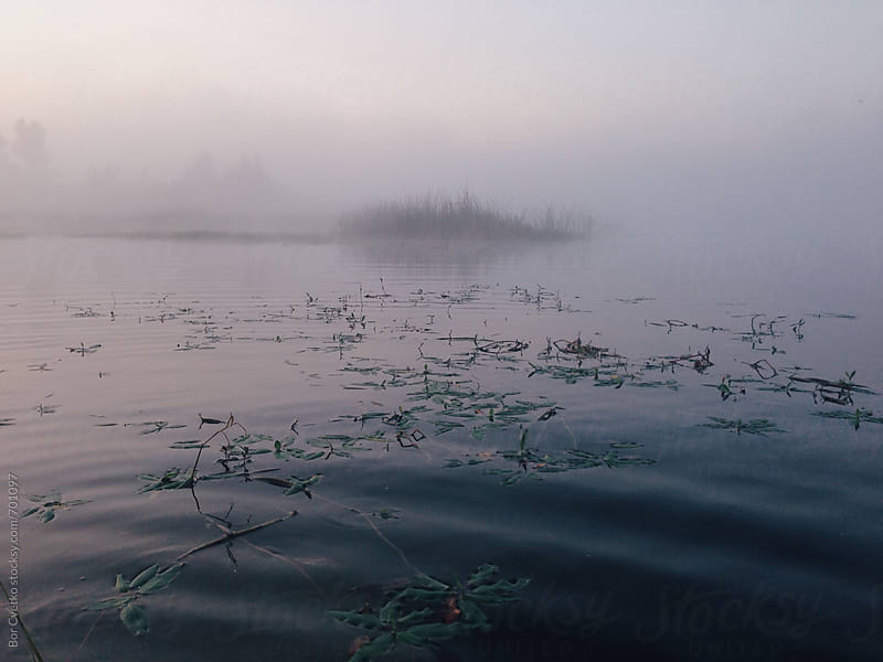 Lake plants in morning light by Bor Cvetko for Stocksy United