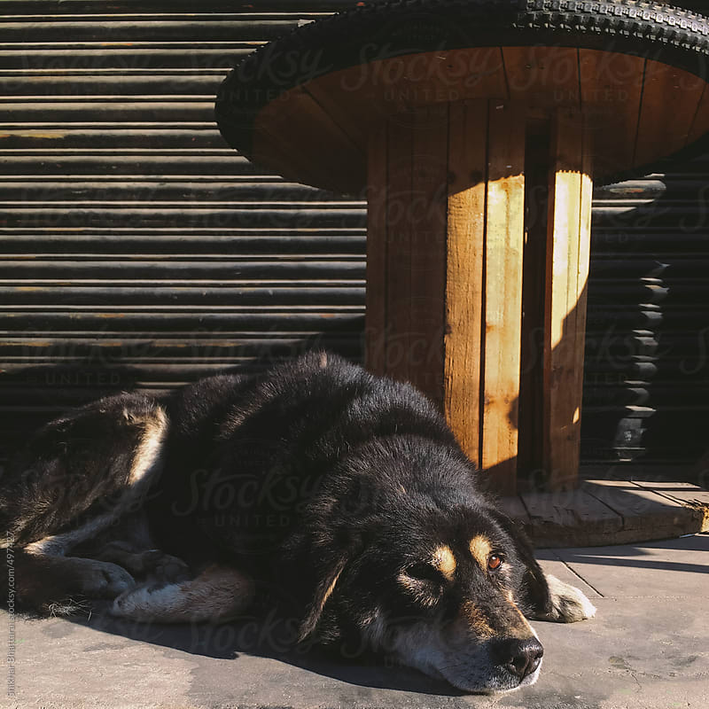 A street dog sitting in the sun early morning. by Shikhar Bhattarai for Stocksy United