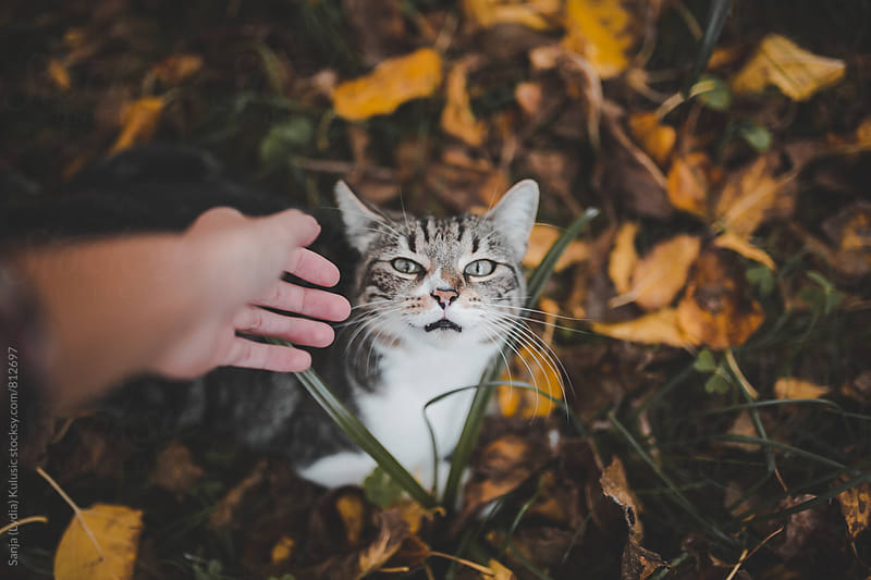 Woman hand is trying to pet a mixed race cat by Sanja (Lydia) Kulusic for Stocksy United